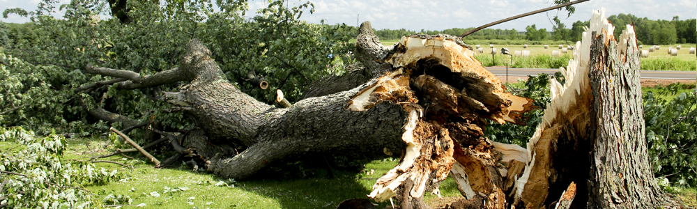 Cropped image of fallen tree